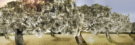 panoramic-images-orchard-of-money-with-dead-grass