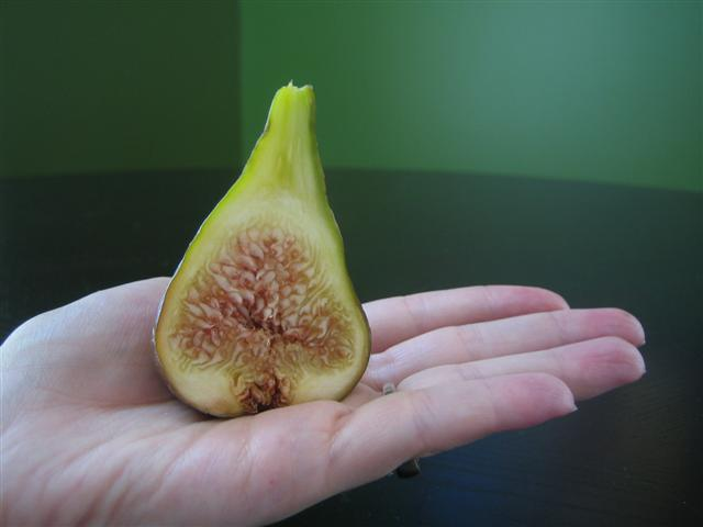 osbornes-prolific-fig-slice