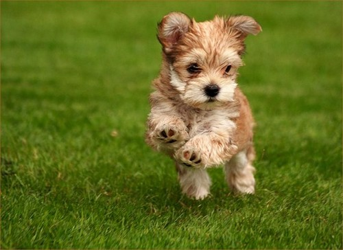 Make Money As a Dog Runner