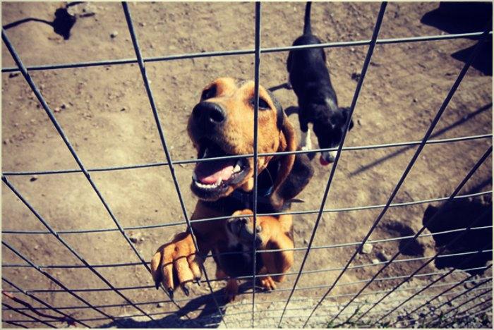 dog-kennel-business